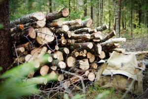 Skogsarbete Foto: David Erixon